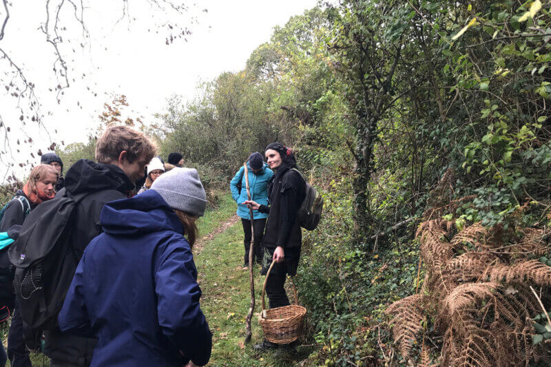 foraging walk in autumn featuring a foraging basket